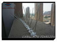 how to stop birds from attacking windows pet corton bird spike china supplier