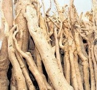 100 Year Old High Quality All Natural Tongkat Ali Root (Eurycoma Longifolia)