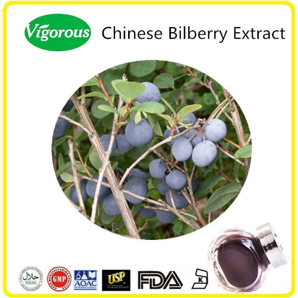GMP Manufacturer Chinese Bilberry Extract/Bilberry Extract/Chinese Bilberry Powder