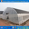 agricultural tomato hydropon greenhouse used