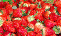 High Quality Fresh Whole Strawberry for Sale