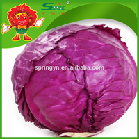 price for red cabbage/cabbage seed with lowest price