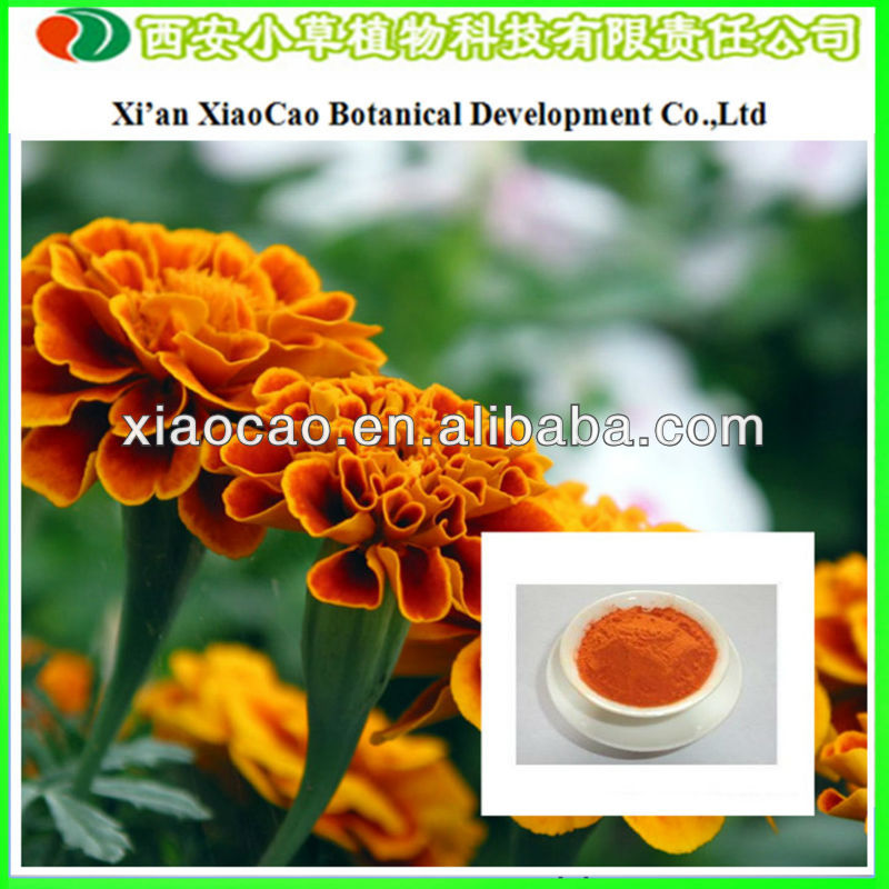 Manufacturer Supply 100% Natural Lutein Power Marigold Plant Extract/Zeaxanthin Lutein/Lutein Herbal Extract