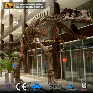 MY DINO Museum Display Realistic Attractive Artificial Dinosaurs Skeletons