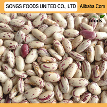 Hot Sale Light Speckled Kidney Beans With Good Quality