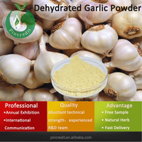 GMP Supply dehydrated roasted garlic Powder/Dehydrated Garlic powder/Garlic