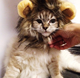 Hot Selling Lion Wig for Dogs Cosplay Lion Realistic Funny Easy to Wear Pet Hat