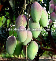 mango amino acid calcium boron chelate fertilizer