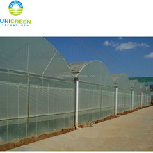 Top cheap multi-span hydroponic greenhouse with plastic film covered