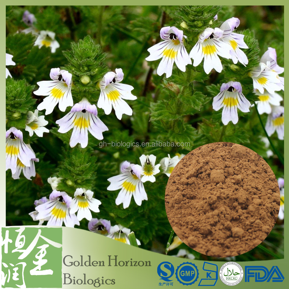 Chinese Herbal Eyebright Euphrasia Officinalis Extract