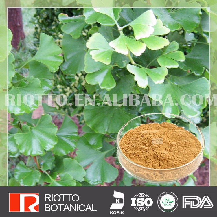 Good quality sell well ginkgo biloba extract