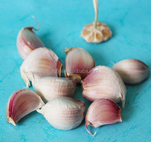 High Quality Fresh Garlic for Sweden , Size 5.0cm-6.0cm in Different Package