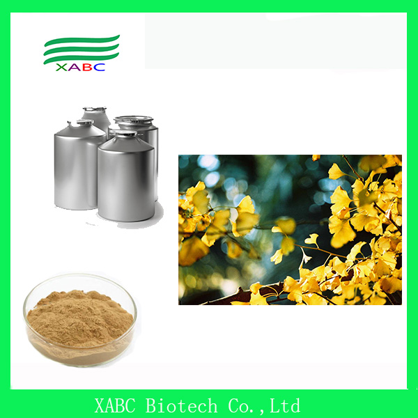 GMP manufacture supply 24:6 flavones 24% lactones 6% ginkgo biloba extract