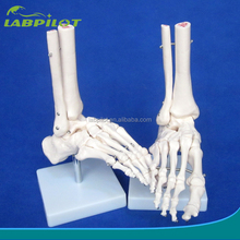 HOT Life-Size Foot Joint Model, Bones of Foot,Foot Skeleton Model