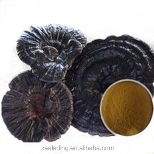 High quality herbal extract Lucid Ganoderma Extract