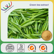 free sample catechin,HACCP Kosher FDA green tea extract,pure nature 30% 60% 80% 85% catechin