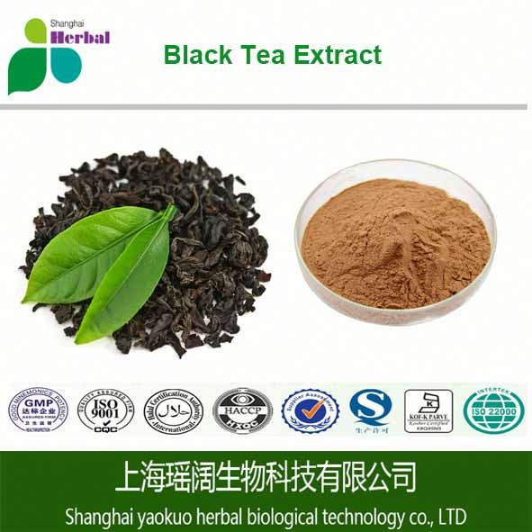 Herb medecine Black Tea Extract 40% Theaflavine (HPLC) powder