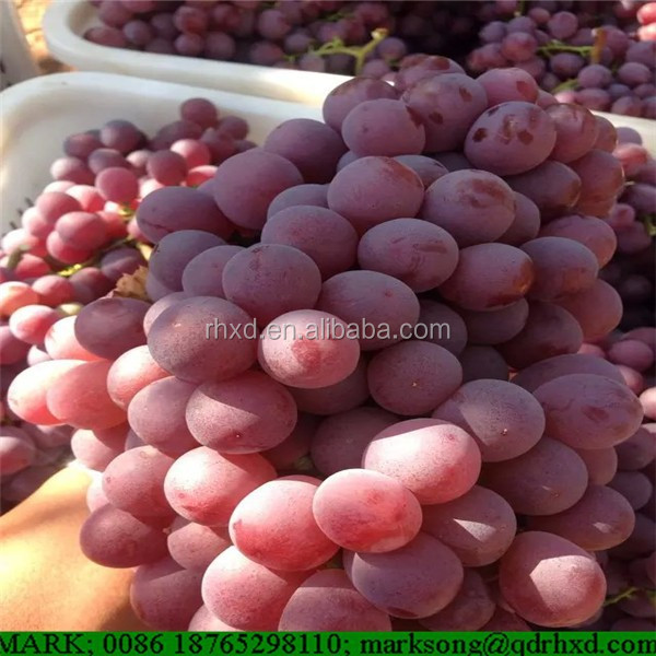 Fresh grape fruit with cheap price