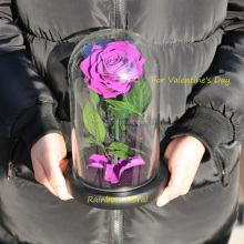 Cheapest beauty and the beast rose glass gift preserved flowers love roses in glass tube for valentine's day glass roses purple