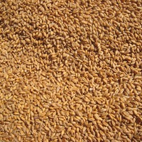 11 5 Protein Milling Wheat