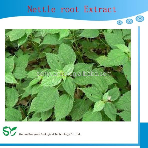 100% pure Nettle Root extract,3, 4-divanillyltetrahydrofuran from GMP factory