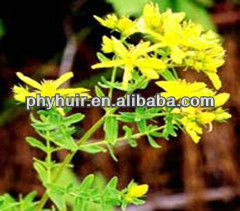 Supply high quality St.John's Wort Extract