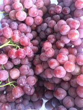 2015 new crop fresh red grape with high quality and low price