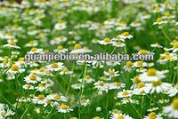 HOT! HOT!! Chamomile Extract/low price/cosmetic