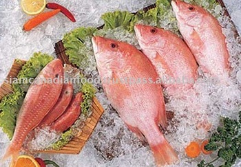Red Mullet (Parupeneus Heptacanthus)