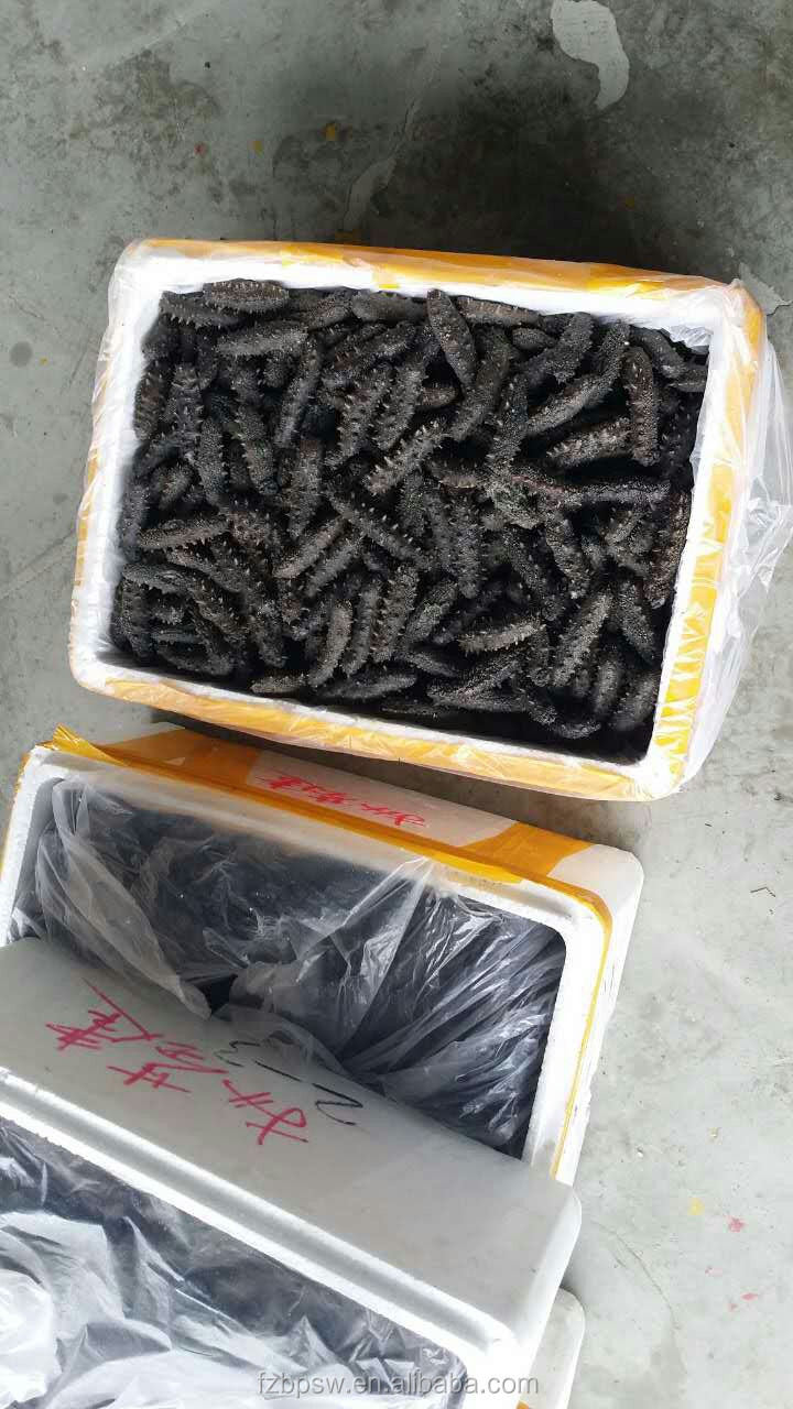 To buy sea cucumber