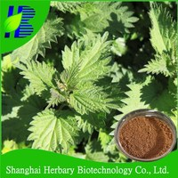 2016 Natural herb extract nettle extract