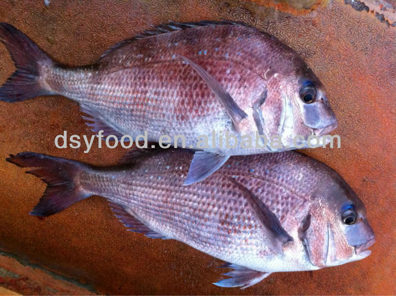 Frozen Red Seabream Fish