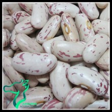 Chinese Heilong Jiang Origin and Yian Origin LSKB or Sepckled Kidney Beans 2014 New Crop Size 220-240pcs