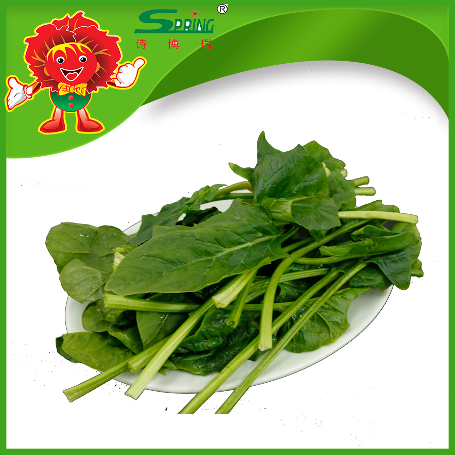 IQF FROZEN SPINACH, TOP QUALITY FRESH VEGETABLES