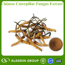 Free Sample Natural Chinese Caterpillar Fungus Extract