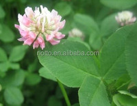 High Quality Natural Red Clover Flower Extract in Riotto!!1