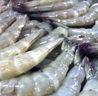 wholesale frozen seafood exporter and trading companies