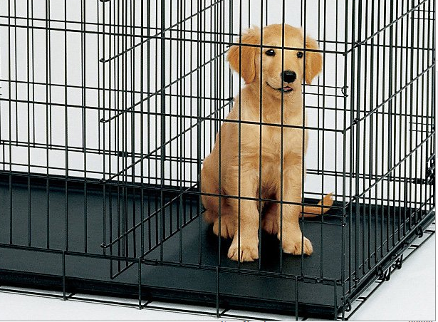 dog carrier/ Dog cage/ dog kennel supplier