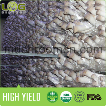 Chinese Agriculture King Oyster Mushroom Spawn Mature Substrate