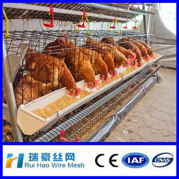 Poultry use egg laying chicken cage welded wire mesh cage with low price