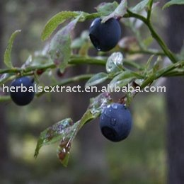 Bilberry Extract, Vaccinium myrtillus, Anthocyanidins