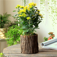 Outdoor Rectangular Wooden Planter Flower Pots for Sale