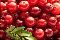 Hot Sale Cranberry Extract Proanthocyanidins/Anthocyanins