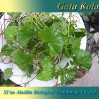 ISO Certificated Natural Gotu Kola P.E