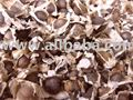 moringa seeds/leaves powder / Moringa oleifera
