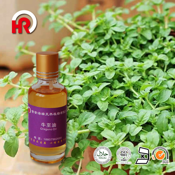 Strong Bactericidal Antibacterial , Antioxidant Effect Animal Digestive Funcation Oregano Oil