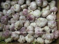 Natural Fresh Garlic Import