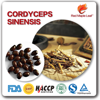 Herbal Supplements Wholesale Cordyceps Sinensis Aweto Capsules