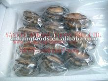 Frozen seafood product Abalone