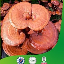 100% natural organic ganoderma lucidum extract.natural lucid ganoderma extract powder